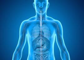 L'intestino, la sede del nostro secondo cervello