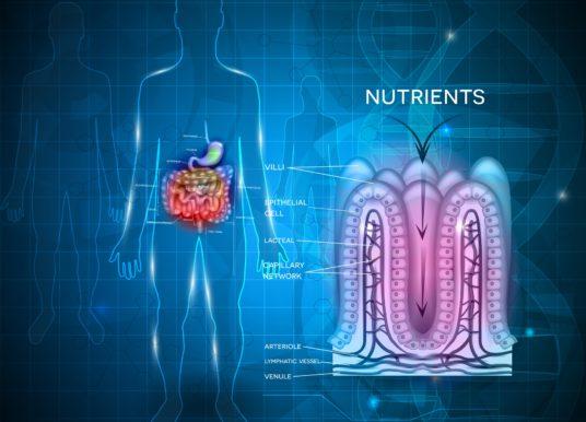 Microbiota e Celiachia